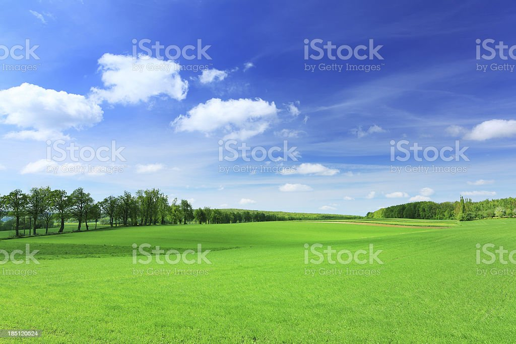 Shadows Dancing on Spring Rolling Landscape royalty-free stock photo