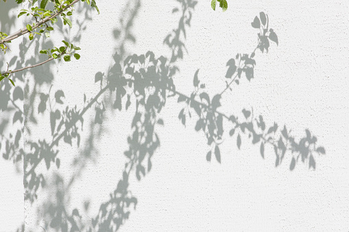 Shadows from foliage on a plastered wall