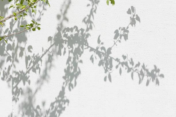 Sombras del follaje sobre una pared enlucida - foto de stock