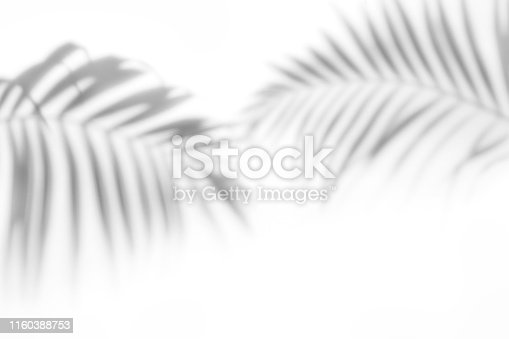 ShShadows from the leaves of tropical trees on a white walladows from palm trees on a white wall