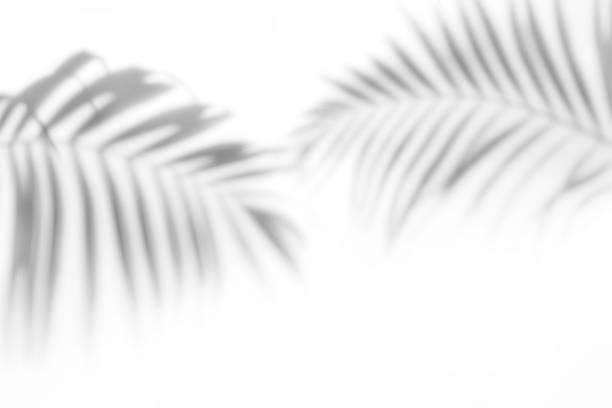 shadows from palm trees on a white wall - тень стоковые фото и изображения
