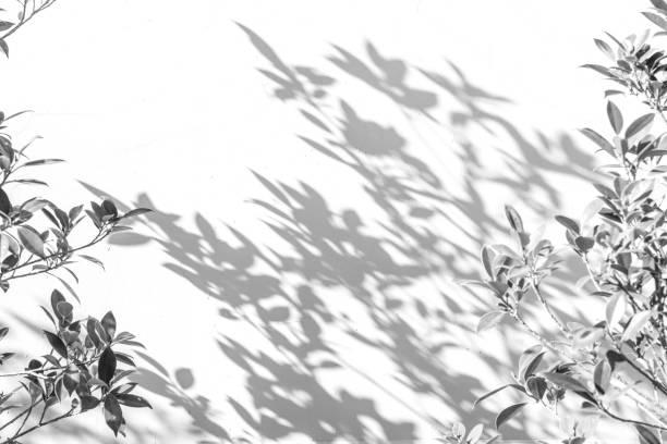 白い壁に影葉。 ストックフォト