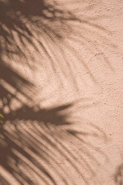 Shadows of a palm tree.... stock photo