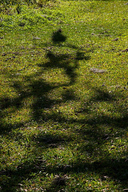 shadows of a tree in the grass stock photo