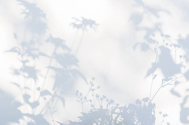 Shadows of flowers on a white semi-transparent cloth stock photo