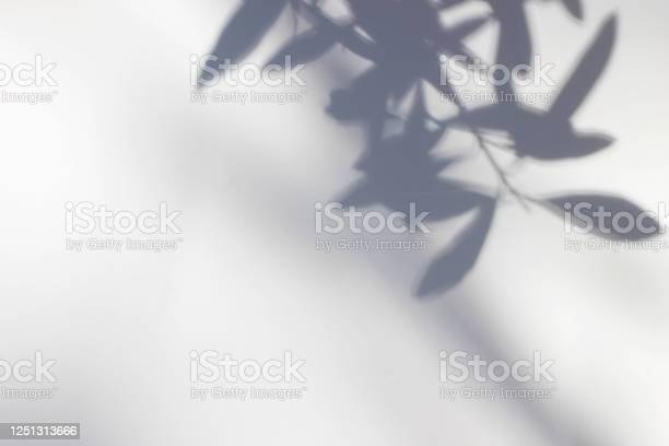 Photo of Shadows of olive tree leaves, branches over white wall. Summer background with a pattern of lens flare. Sunlight overlay, soft blurred photograpy, no people, empty copy space. Mediterranean concept.