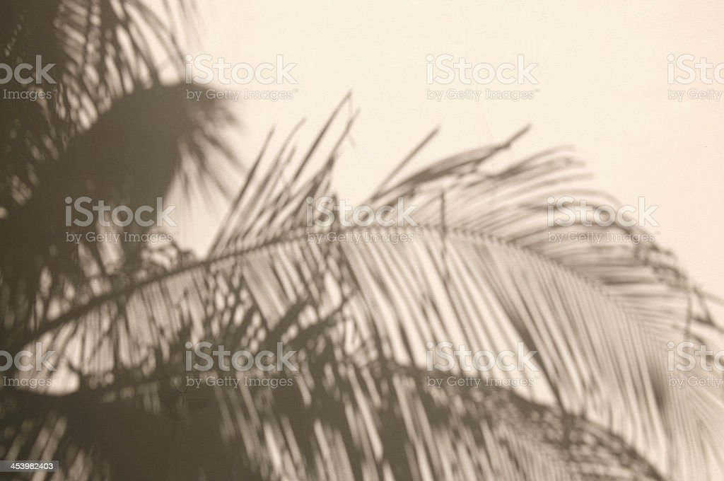 Shadows of Palm Fronds Against Stucco Wall stock photo