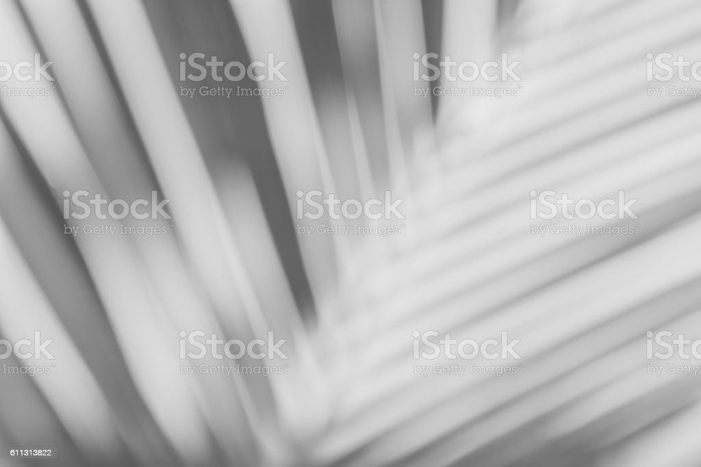 shadows of Palm leaf on a white wall. stock photo