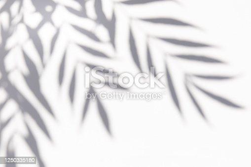 istock Shadows palm leaf 1250335180