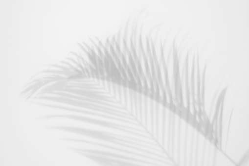 shadows palm leaves on a white wall. abstract background