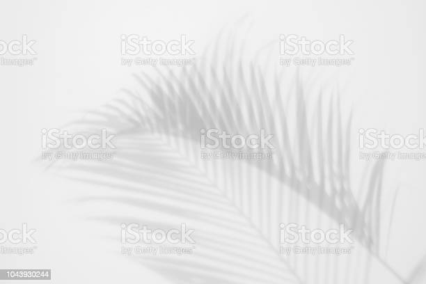 Photo of shadows palm leaves on a white wall. abstract background