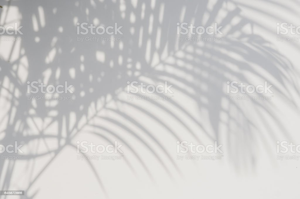 shadows palm leaves on a white wall. stock photo