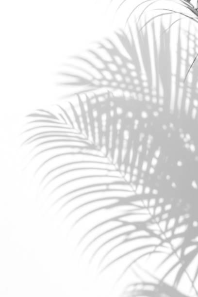 ヤシの葉の影 ストックフォト