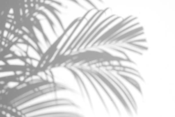 Shadows palm leaves picture id655271874?b=1&k=6&m=655271874&s=612x612&w=0&h=dtrnujg5wqkljpztc0t1uvs66yfrfgr1a eqn5pzobg=