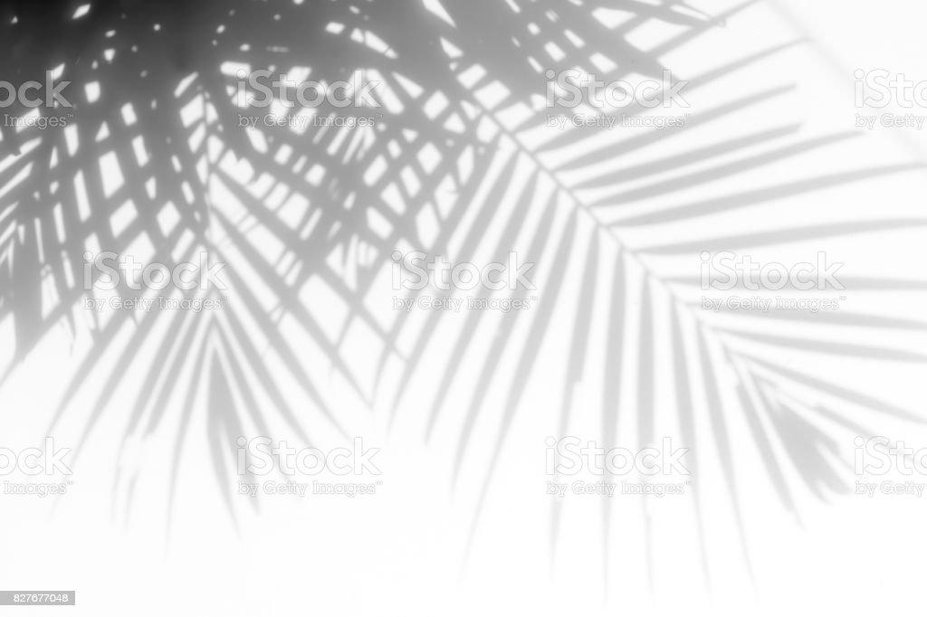 shadows palm leaves stock photo