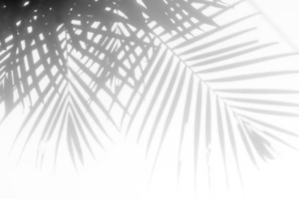 shadows palm leaves stock photo