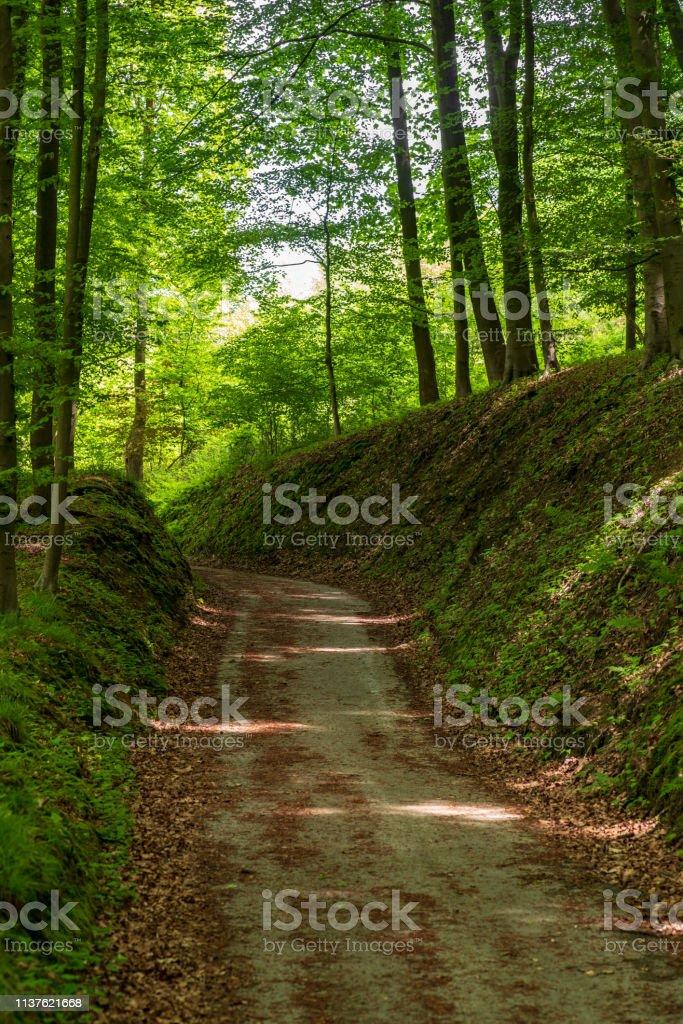 Schatter Hohlweg durch den Wald – Foto