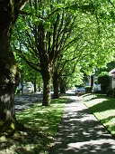 Summer light shines through thick trees to this sidewalk in residential east Portland, Oregon.