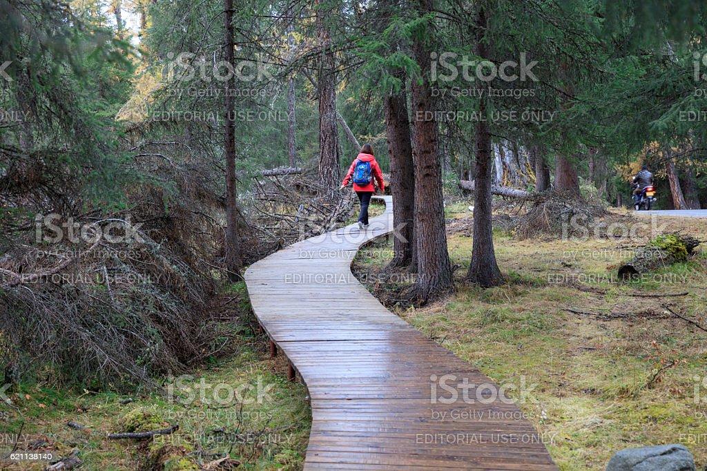 Shady path at Kanas Lake at Autumn, Xinjiang, China stock photo