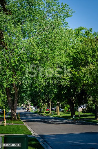 Shady residential tree-lined street in the summer