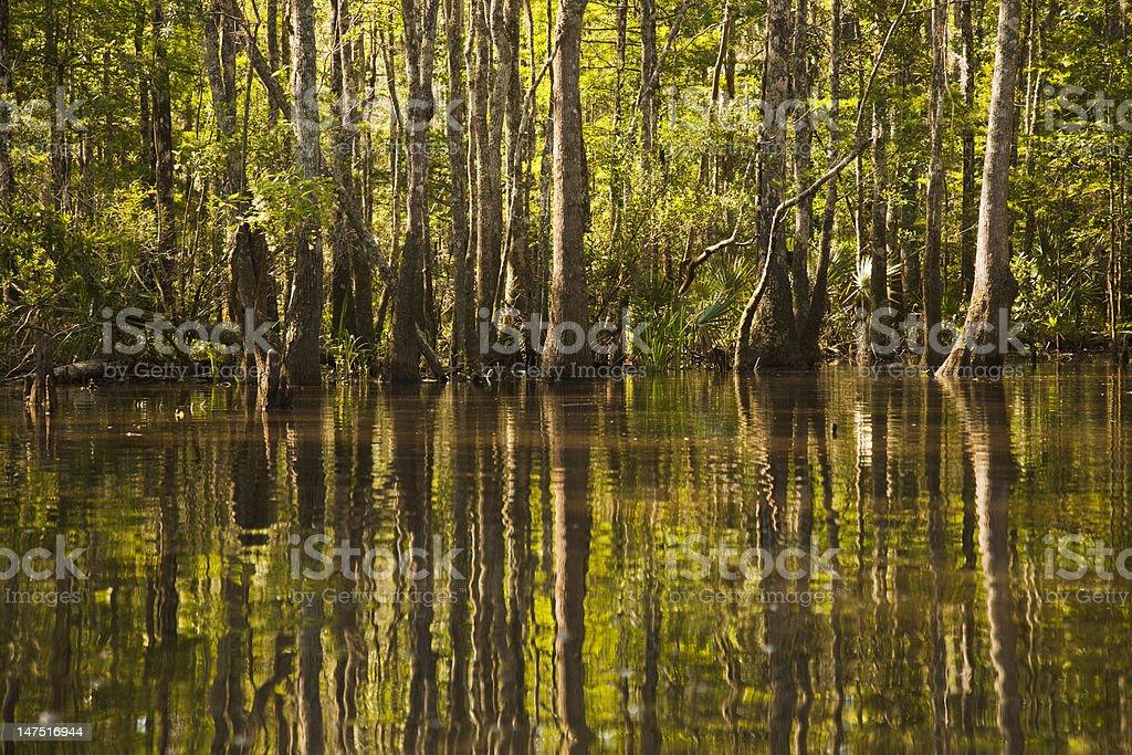 Shady Swamp Reflections stock photo