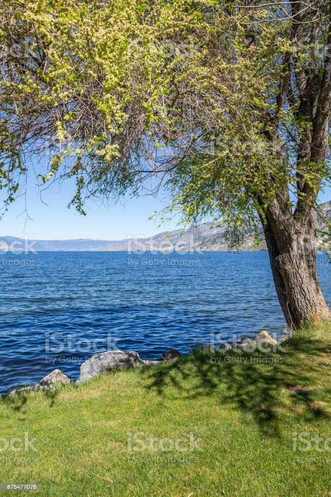 Shady tree along Okanagan lake shore, Naramata stock photo