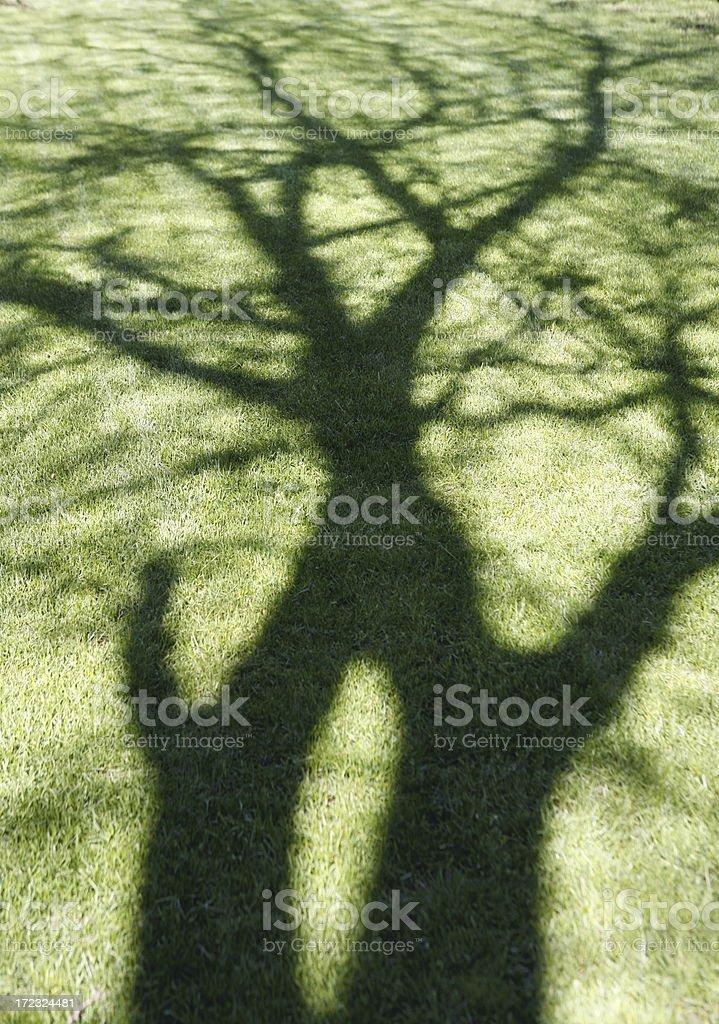 Shady Tree royalty-free stock photo