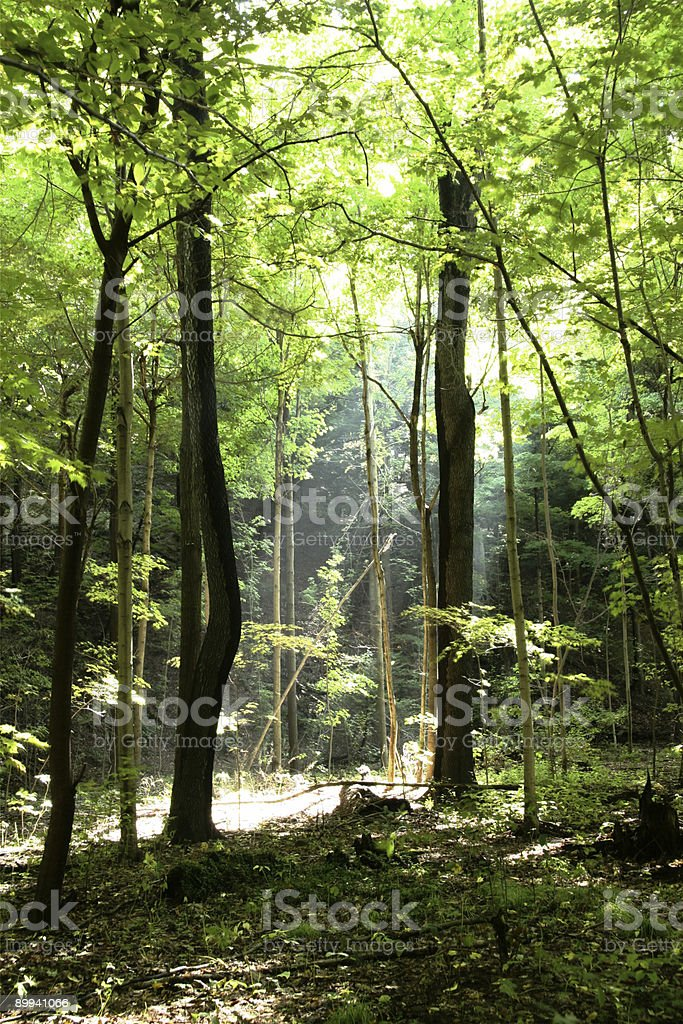 Shaft Of Light - Youngstown, Ohio royalty-free stock photo