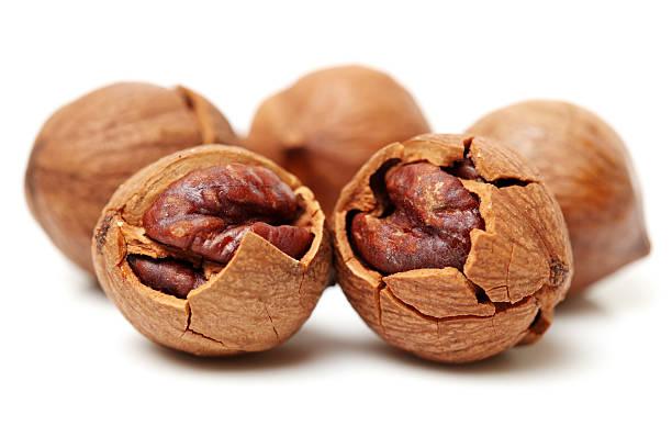 shagbark hickory nuts - desmond koch stock-fotos und bilder