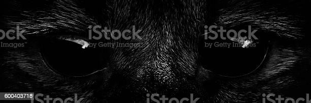 Shaggy monster black eyes closeup picture id600403718?b=1&k=6&m=600403718&s=612x612&h=jrb58zvnpchf5tjoyehtba1bl7fb6m6qng rgn7foze=