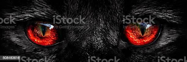 Shaggy monster red eyes closeup picture id508483616?b=1&k=6&m=508483616&s=612x612&h=wbb3 i4agmh3abocuestkwhacvqsvkrlvs4ice2p73m=