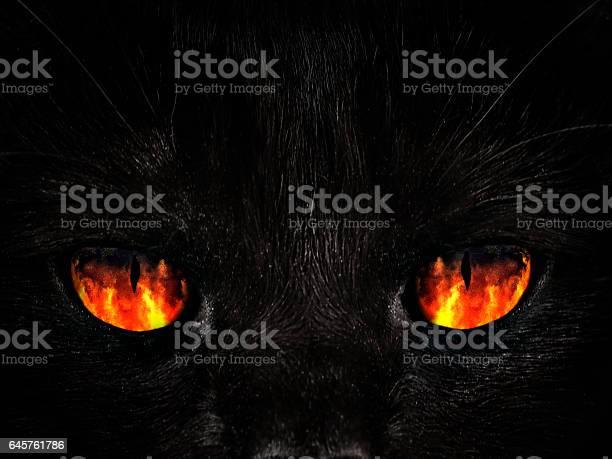 Shaggy monster red eyes closeup picture id645761786?b=1&k=6&m=645761786&s=612x612&h=pt7larzhspuopxdffxwbynwji8k5g0bf48lzd6qlme8=