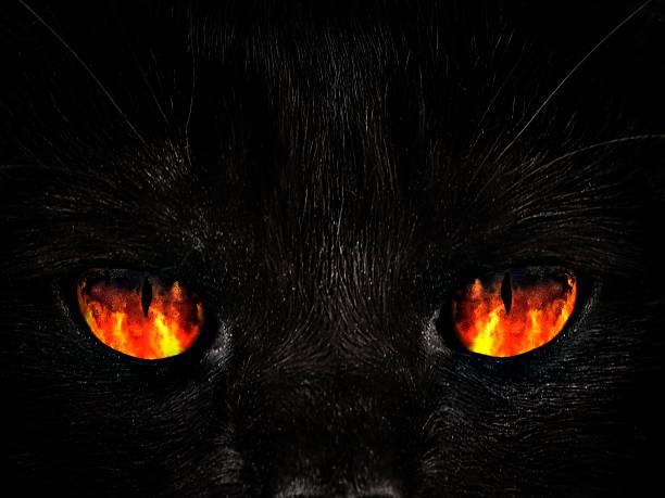 Shaggy monster red eyes closeup picture id645761786?b=1&k=6&m=645761786&s=612x612&w=0&h=hngt4txspfxuky4kgooyirjarsbsec8glssyndrczyk=