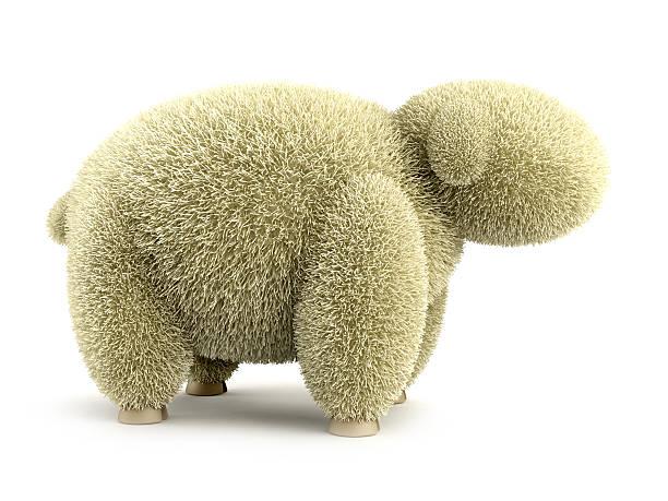 shaggy sheep 3d stock photo
