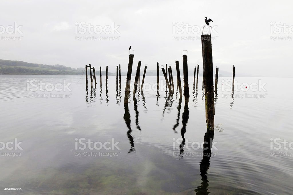 Shags on poles in Isle of Mull royalty-free stock photo