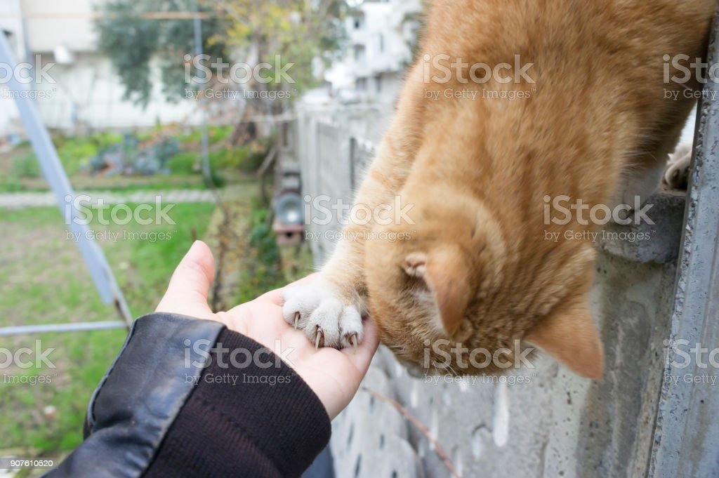 Shake hands with a cat stock photo