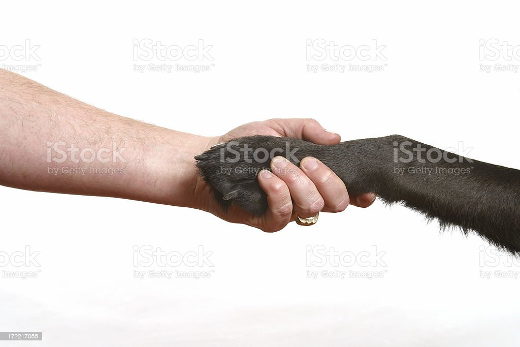 Shake with Man's Best Friend - REQUEST royalty-free stock photo