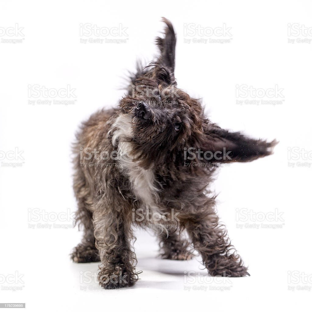Shakin all over! royalty-free stock photo