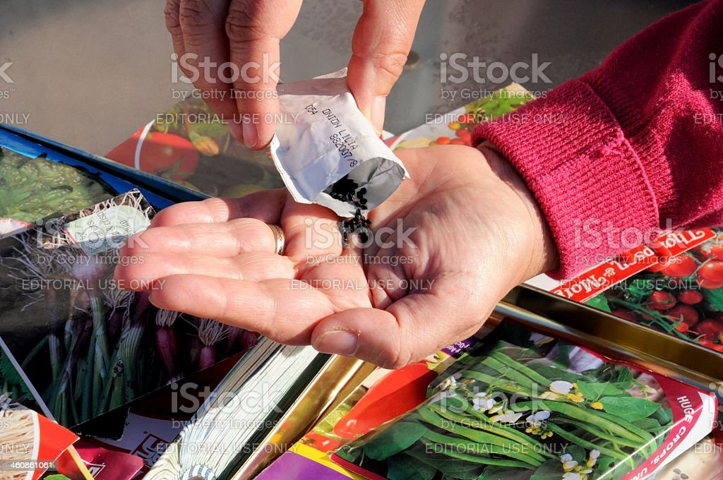 Shaking onion seeds out of packet. stock photo