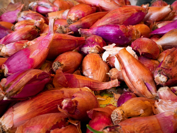 Shallots, heap of red onions. Harvesting from organic farming. stock photo