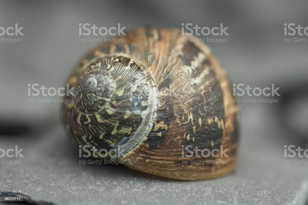 Shallow Depth of Field Snail royalty-free stock photo