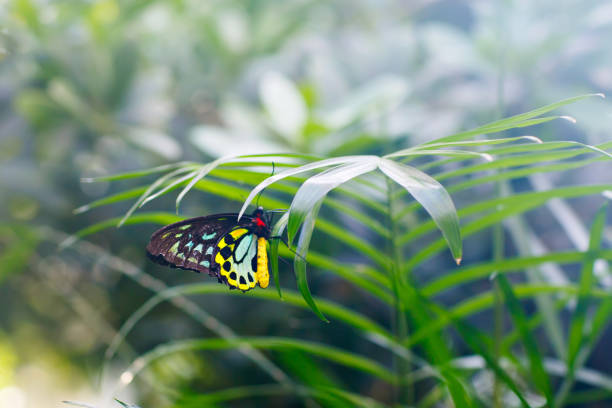 Shallow focus closup image of a beautiful butterfly picture id808070528?b=1&k=6&m=808070528&s=612x612&w=0&h=radpglcpd1eek5eo3gejgkkbdk9mqy1hk7hwd3oofda=