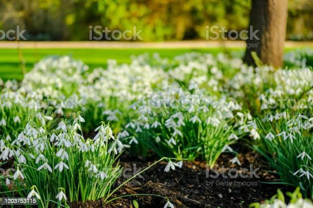 Shallow focus of some freshly growing snowdrop flowers seen by a lake picture id1203753115?b=1&k=6&m=1203753115&s=612x612&h=vaytdoeukhshvksjxgg 4n bzgfxgsajlm4y7r5yl8y=