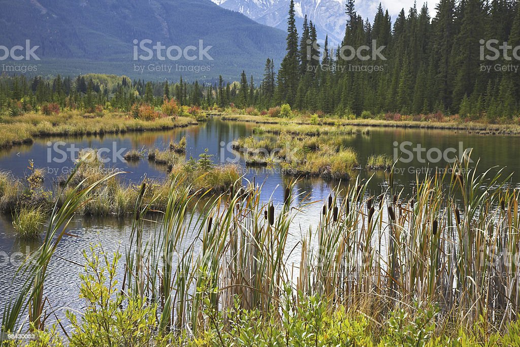 Shallow lake and  hummock with a yellow grass royalty-free stock photo