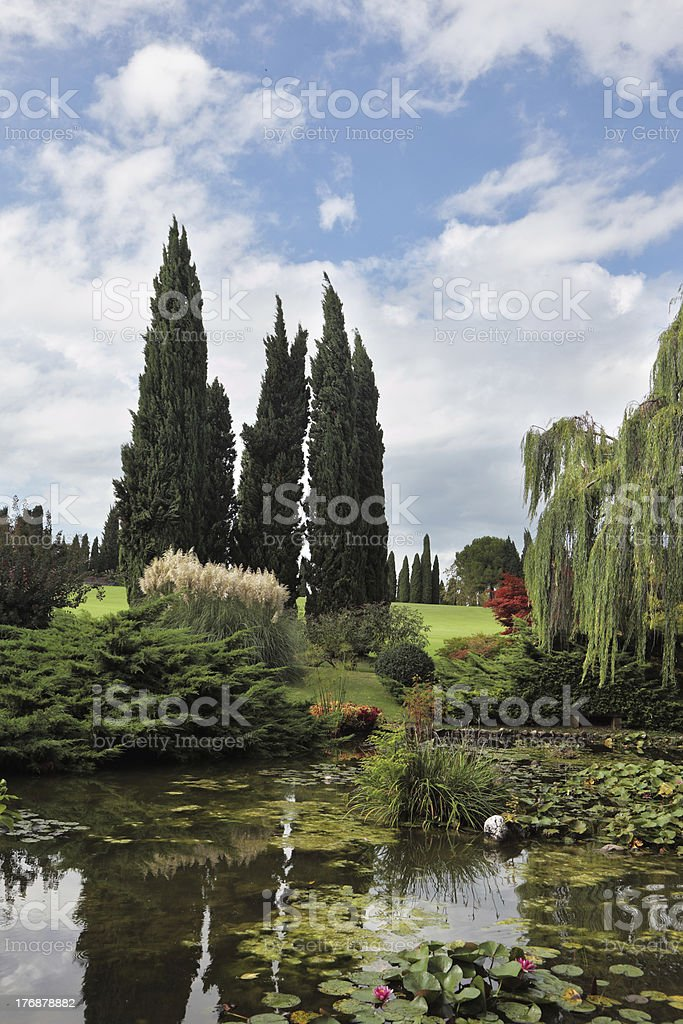 Shallow pond, cypress and lily royalty-free stock photo