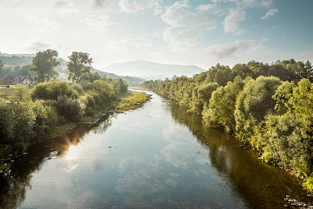 shallow raba river during drought, poland - river stock photos and pictures