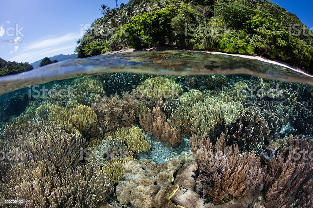 Shallow Reef and Island in Raja Ampat stock photo