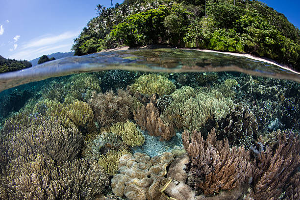 Shallow Reef and Island in Raja Ampat - Photo