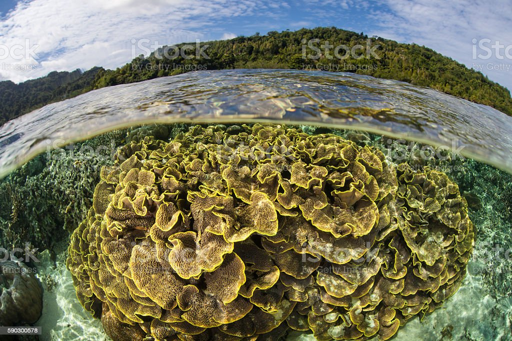 Shallow Reef in Ambon Стоковые фото Стоковая фотография