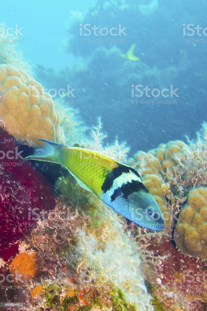 Shallow reefs royalty-free stock photo